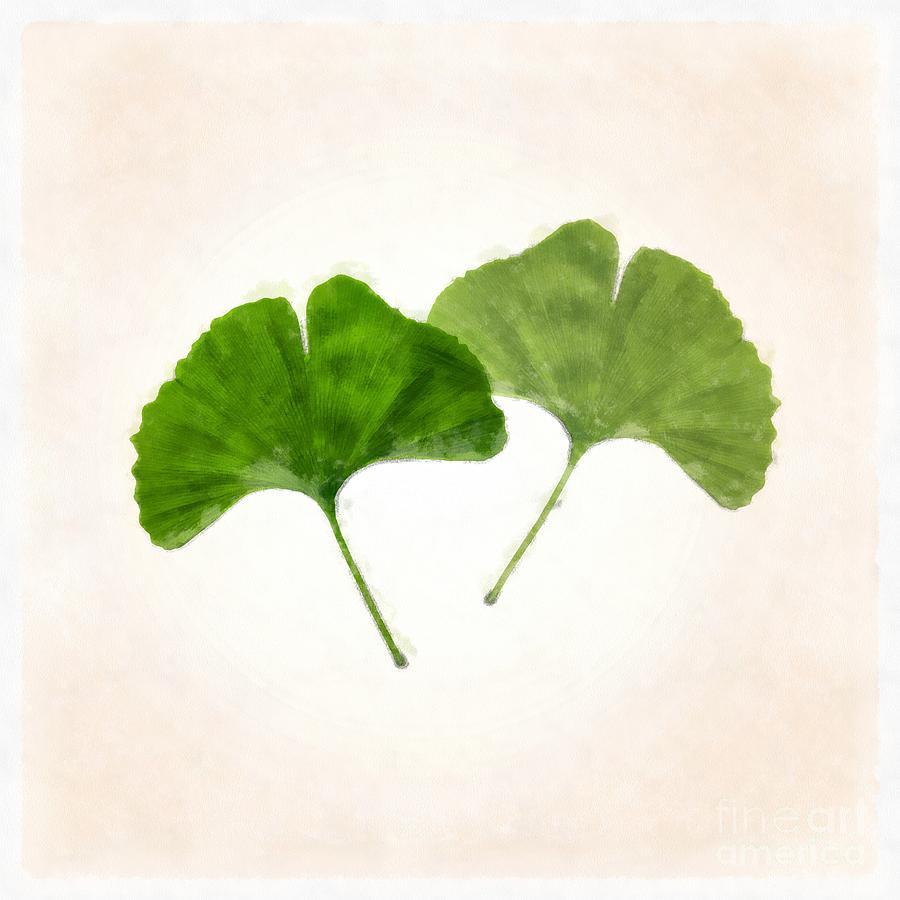 ginkgo leaves watercolor photograph by edward fielding