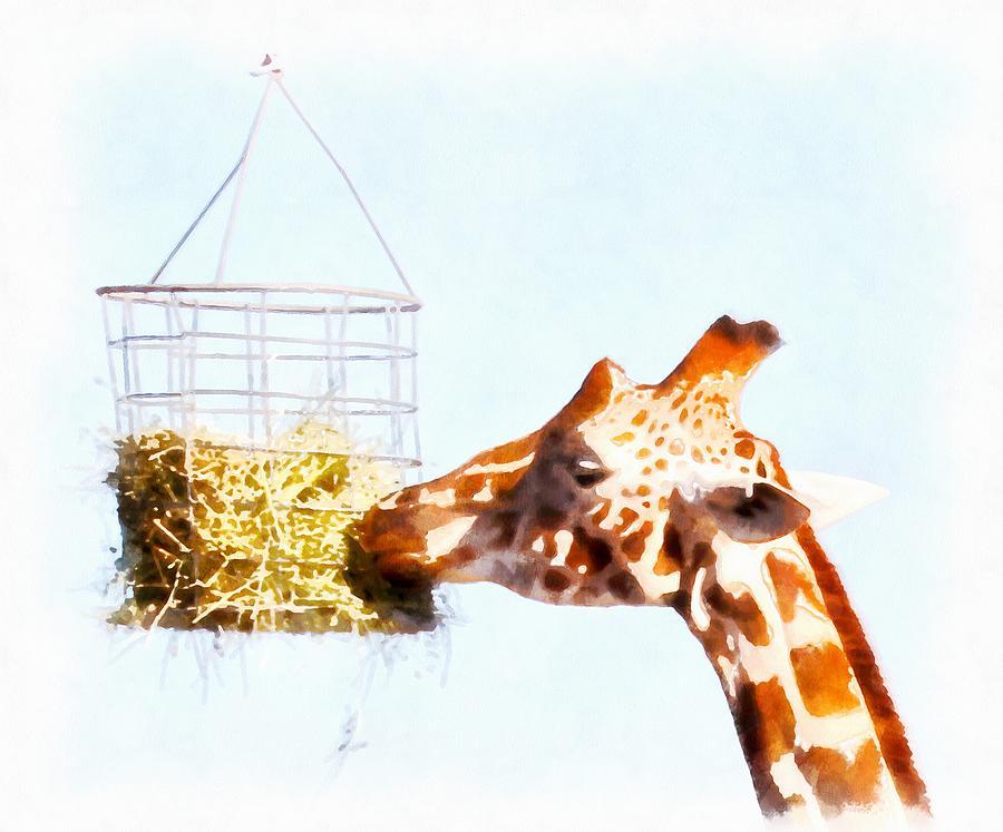 Giraffe Feeding From Overhead Basket Photograph