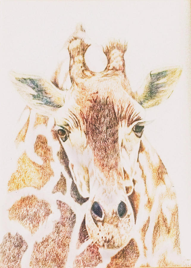 Giraffe by Gerry Delongchamp