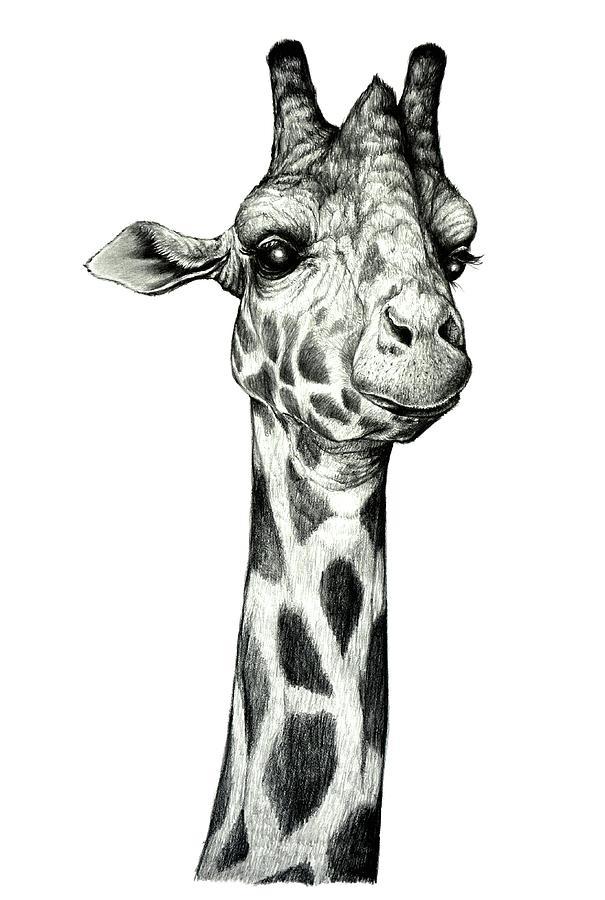 Giraffe Drawing - Giraffe by Heidi Kriel