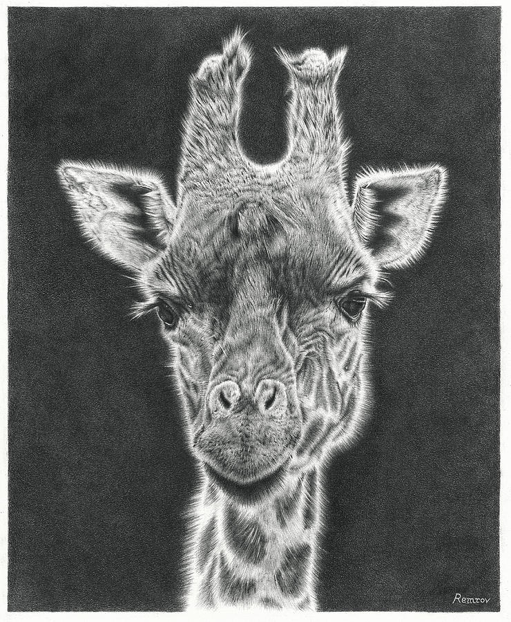 Giraffe Pencil Drawing by Remrov