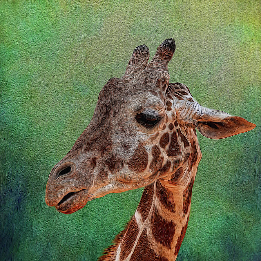 Giraffe Photograph - Giraffe Square Painted by Judy Vincent