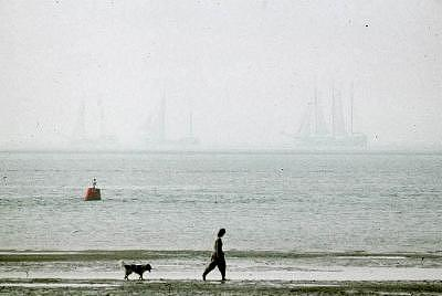 Dog Photograph - Girl And Dog With Ships In The Early Morning by PJ Steinmeijer