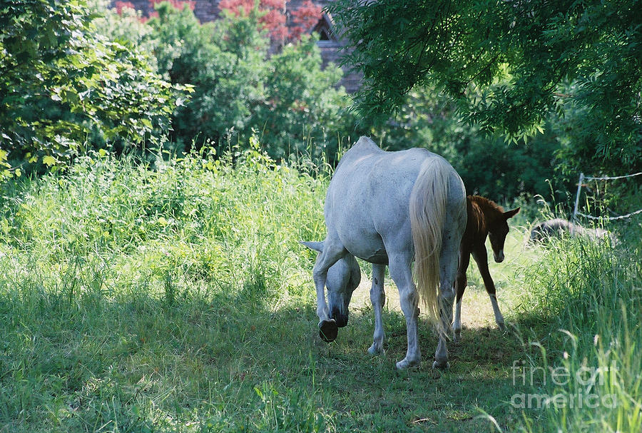 And Photograph - Giverny Mare And Foal Landscape by Nadine Rippelmeyer