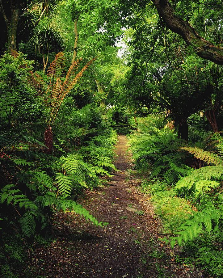 Co Kerry Photograph - Glanleam, Co Kerry, Ireland Pathway by The Irish Image Collection