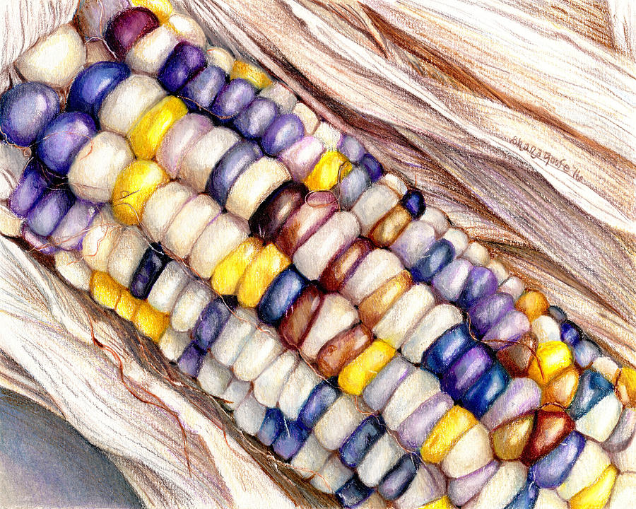 Glass Gem Corn Drawing By Shana Rowe Jackson