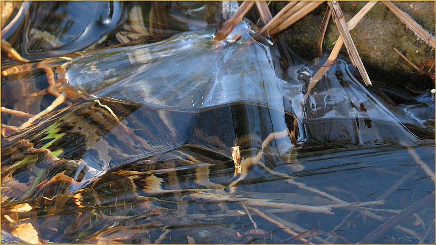 Ice Photograph - Glass Grasped Grass by Doug Bratten