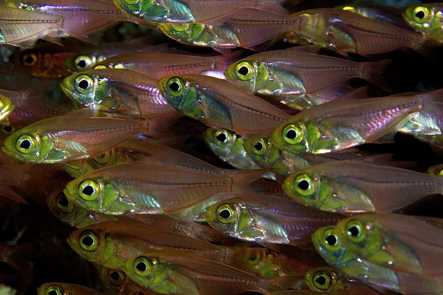 Glassfish 2 Photograph