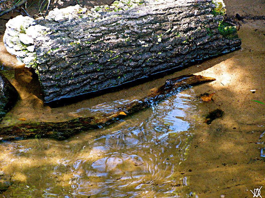Glassy Water Photograph - Glassy Water by Debra     Vatalaro