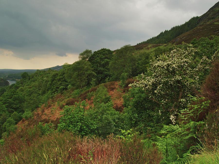 Hillside Photograph - Glen Trool by Steve Watson