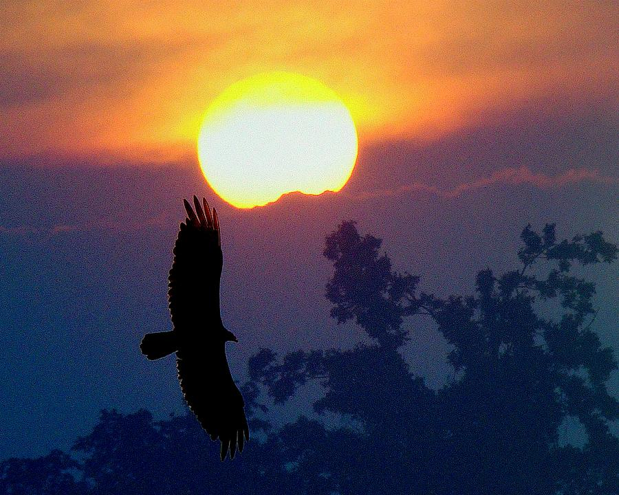 Sunset Photograph - Gliding By The Sun by J R Seymour