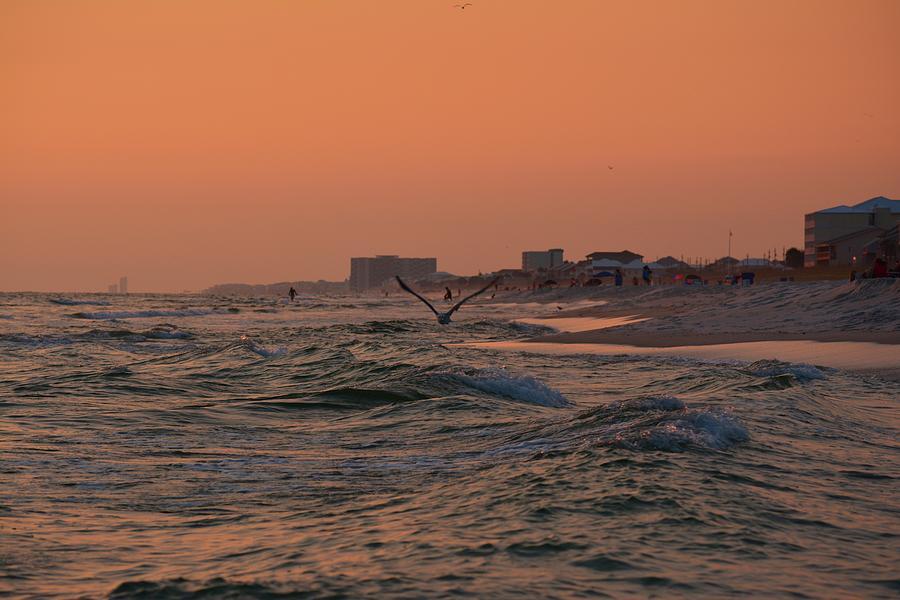 Seagull Photograph - Gliding The Beach by Tamra Lockard