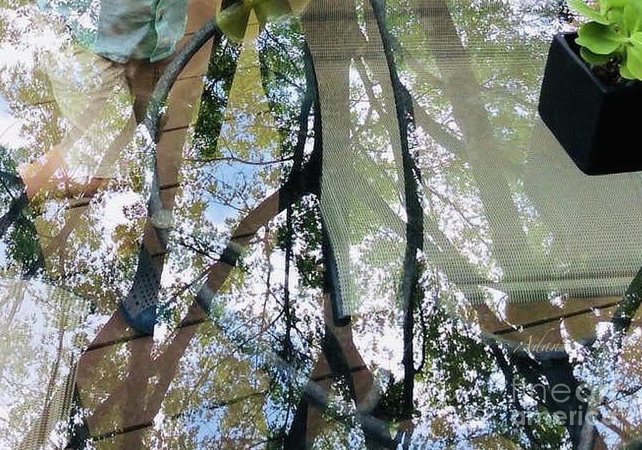 Glimpses - Glass Legs Photograph