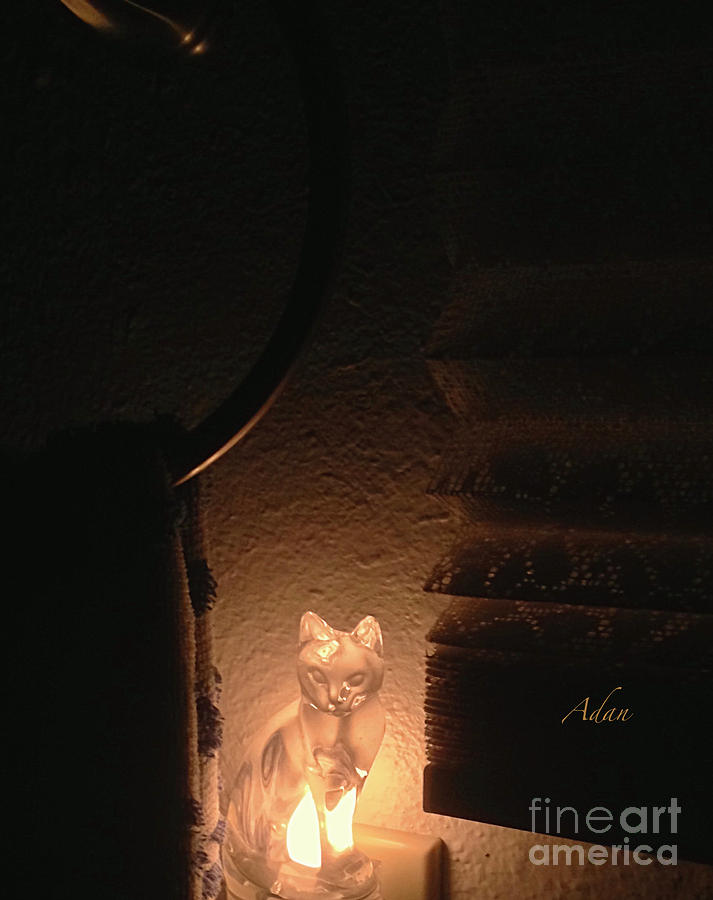 Glimpses - Night Cat Photograph