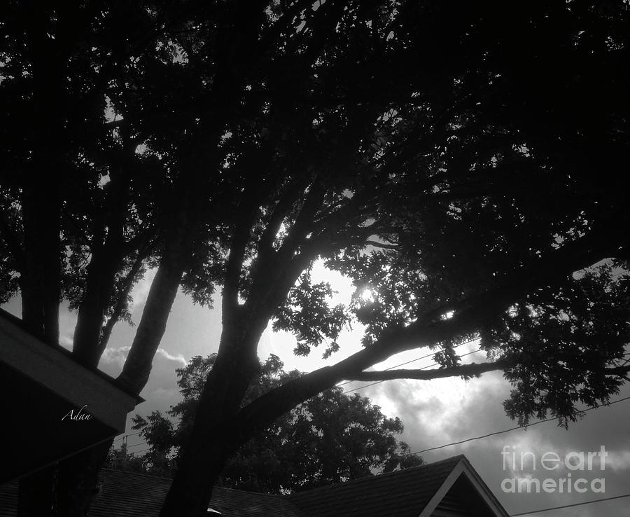 Glimpses - Summer Storm Bw Photograph