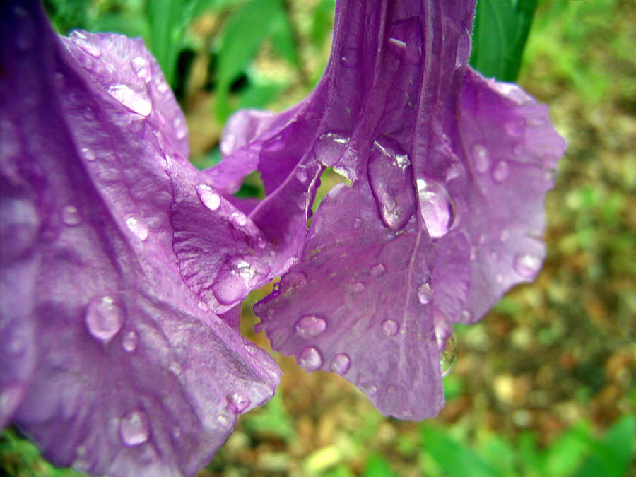 Purple Photograph - Glistening by Nicole I Hamilton