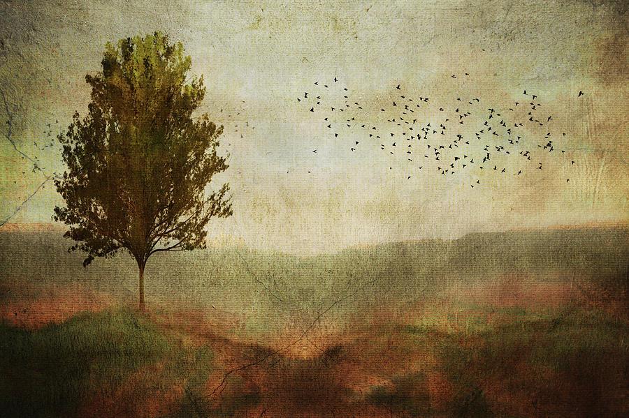 Gloomy Meadow by Paul Bartell