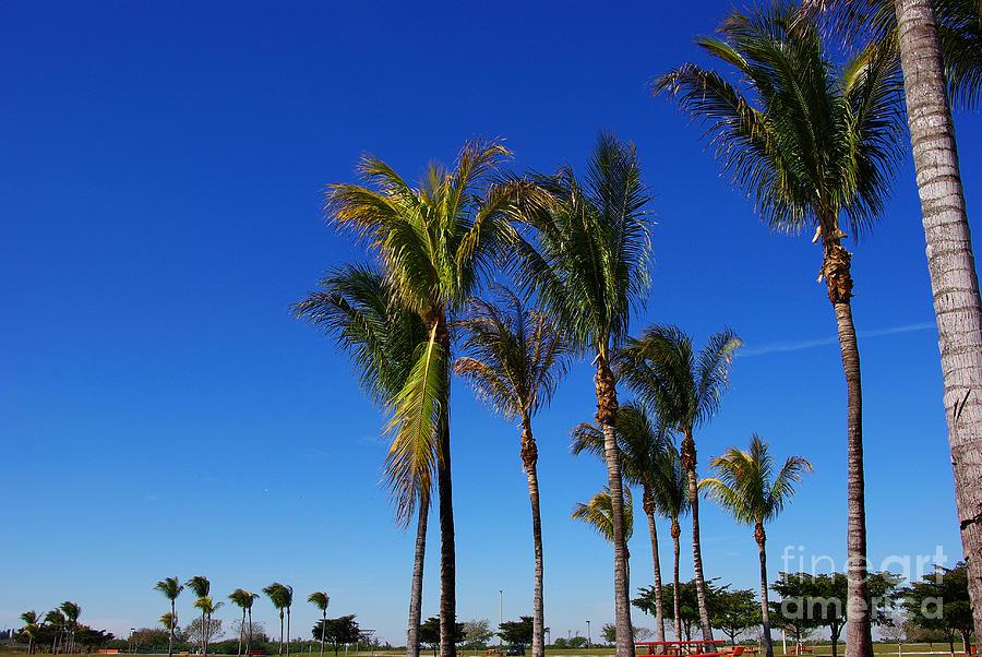 Palm Photograph - Glorious Palms by Zalman Latzkovich