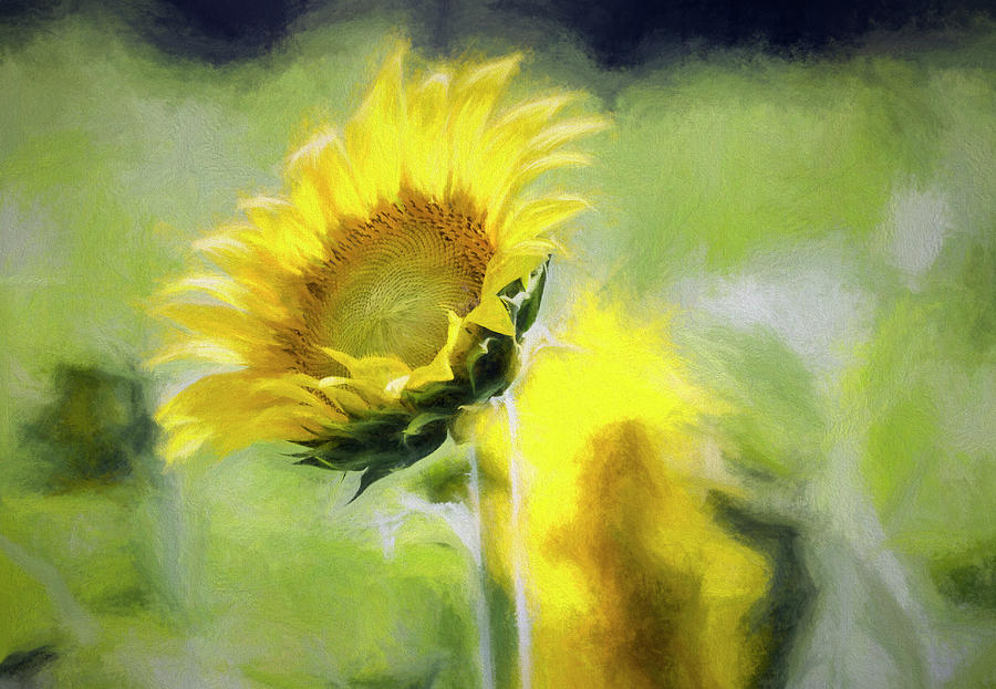 Glorious Sunflower Photograph