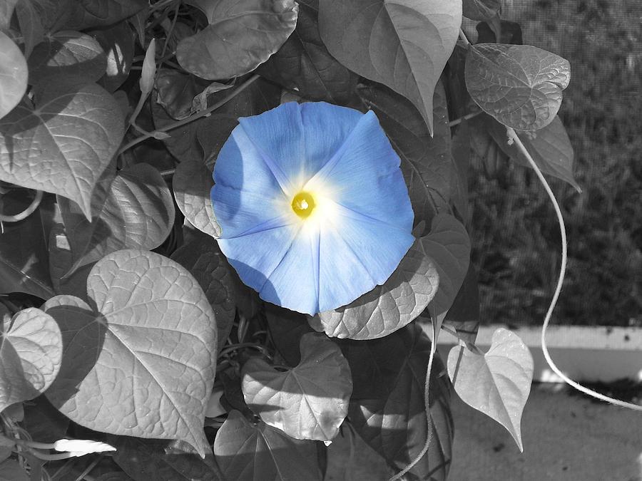 Glory Blue Photograph by Lindsay Clark