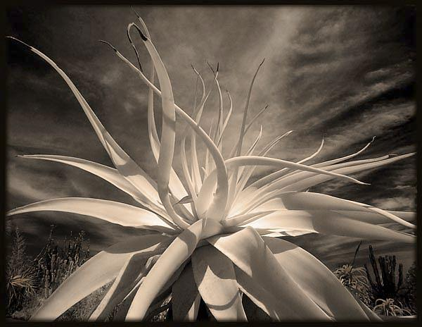 Infrared Photograph - Glory In The Garden by Eileen Mandell