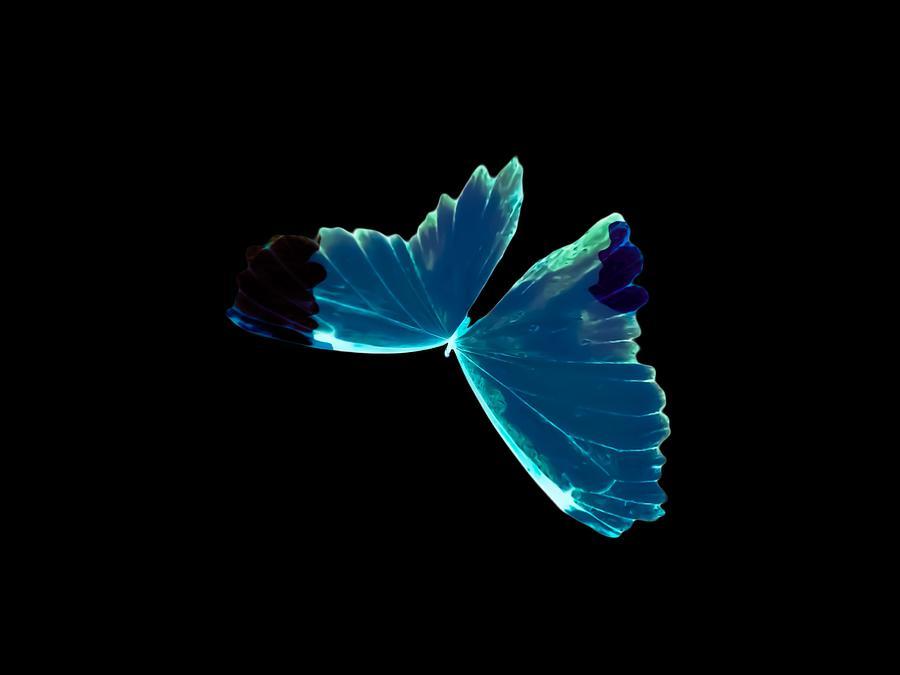 glowing-blue-butterfly-heather-joyce-morrill.jpg