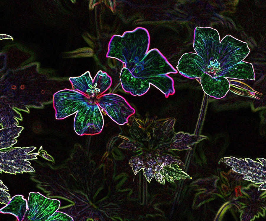 Flowers Photograph - Glowing Flowers by Scott Gould