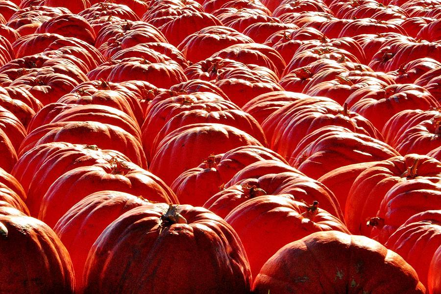 Glowing Pumpkin 4555 Photograph