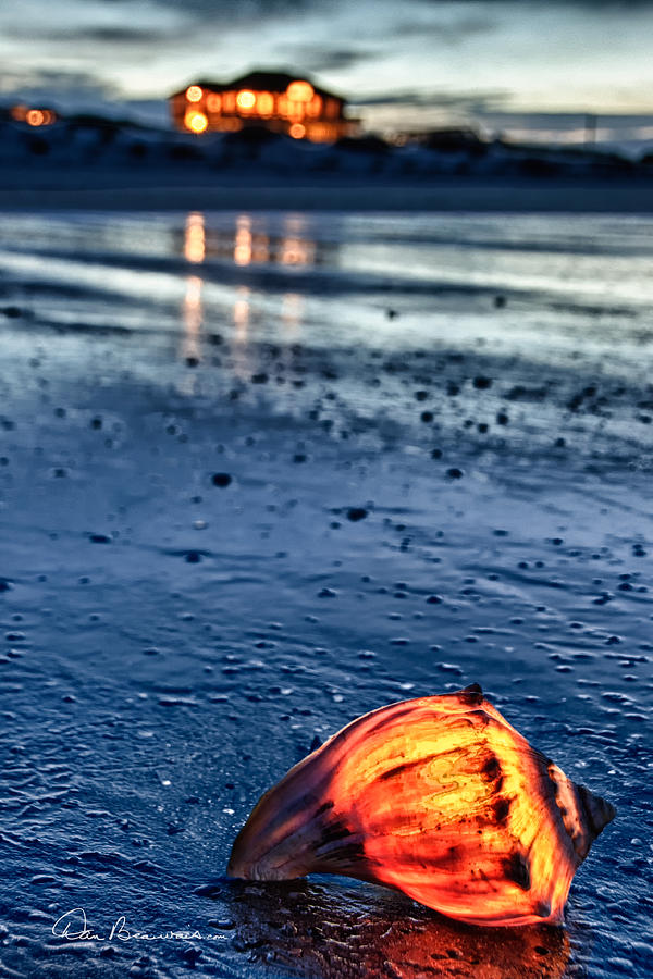Glowing Shell 7729 Photograph