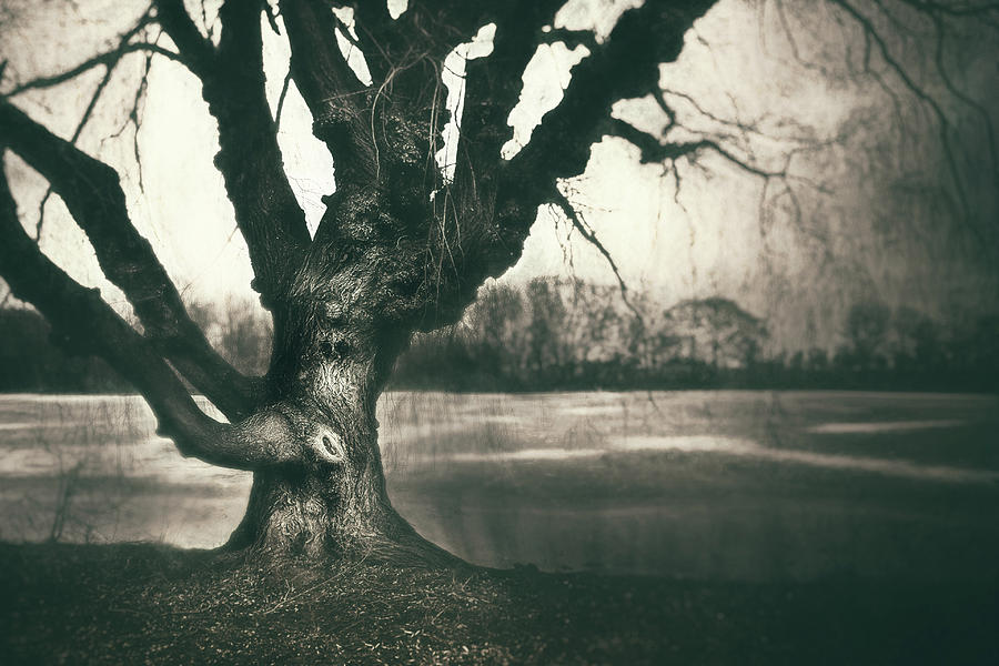 Gnarled Old Tree Photograph