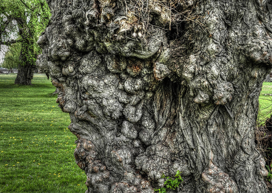 Gnarled Up Close Photograph by Chris Fleming