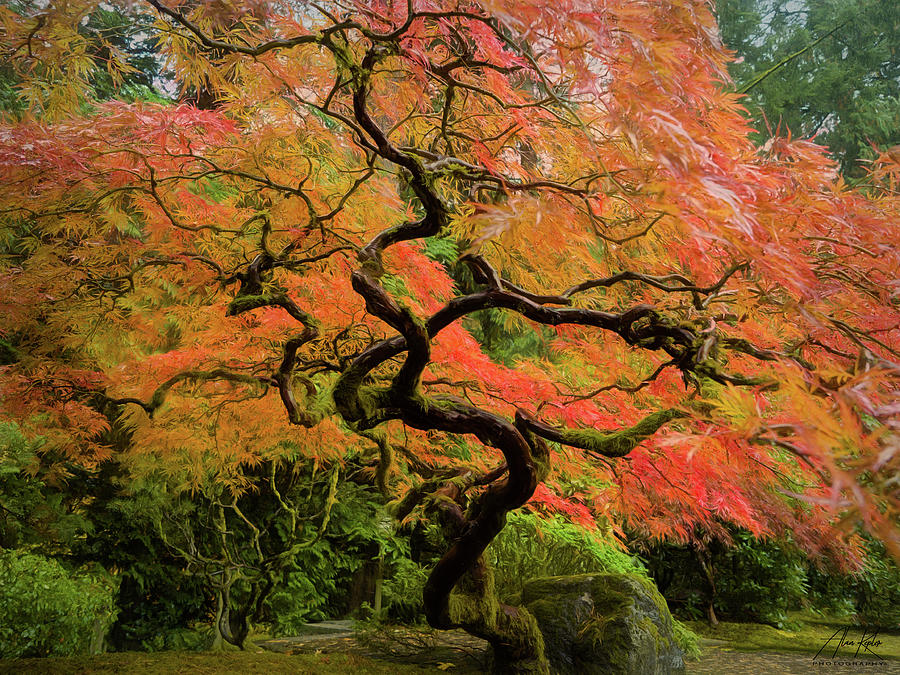 Gnarly Maple Photograph