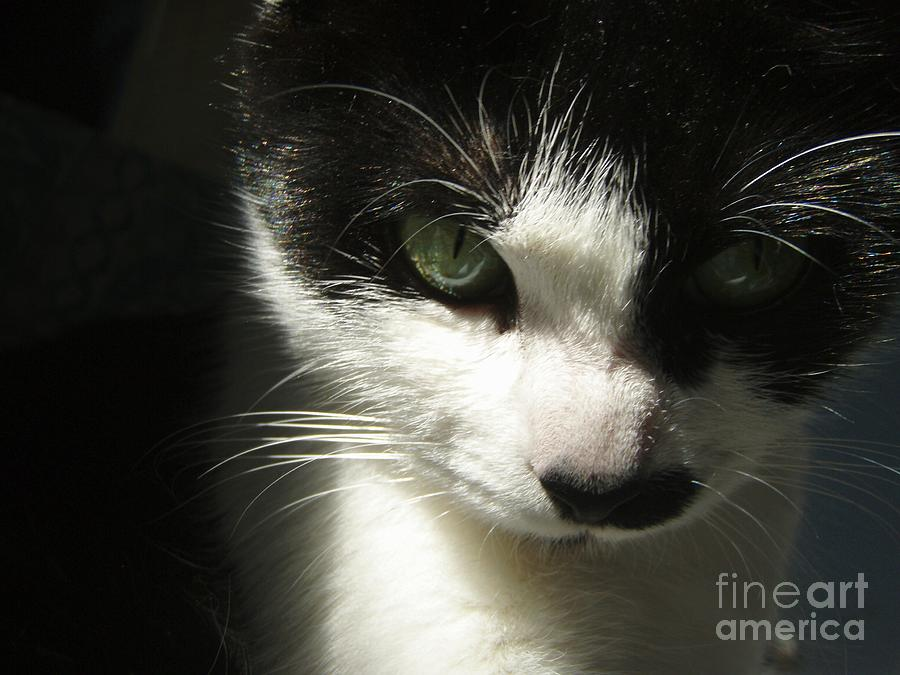 Cat Eyes Photograph - Go Ahead Make My Day  by Kristine Nora