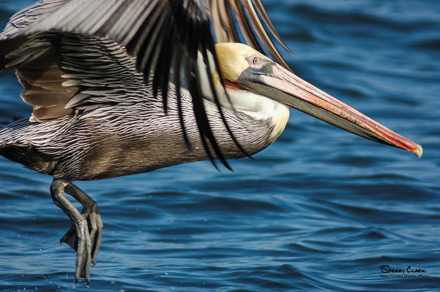 Ocean Photograph - Go anywhere by Sherry Clark
