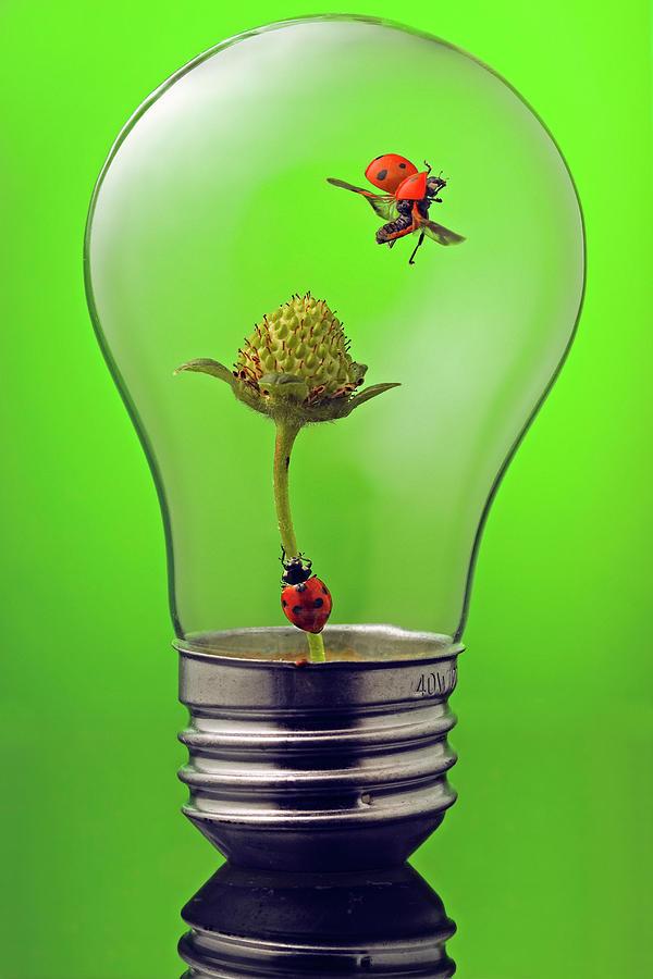 Go Green Photograph