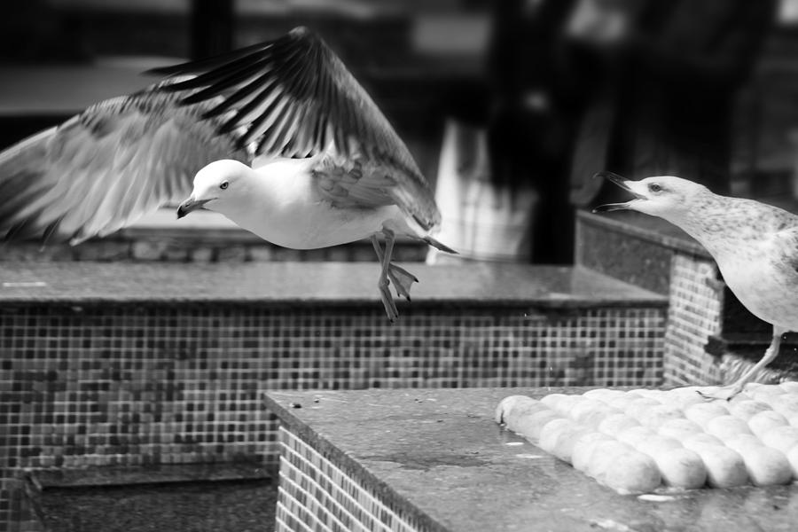 Istanbul Photograph - Go On Go by Jez C Self