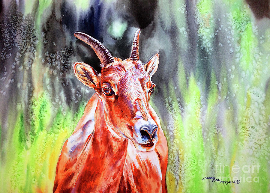 Goat Painting - Goat From The Mountain by Tracy Rose Moyers
