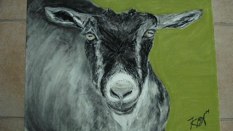 Animal Pastel - Goat by Kate Padberg