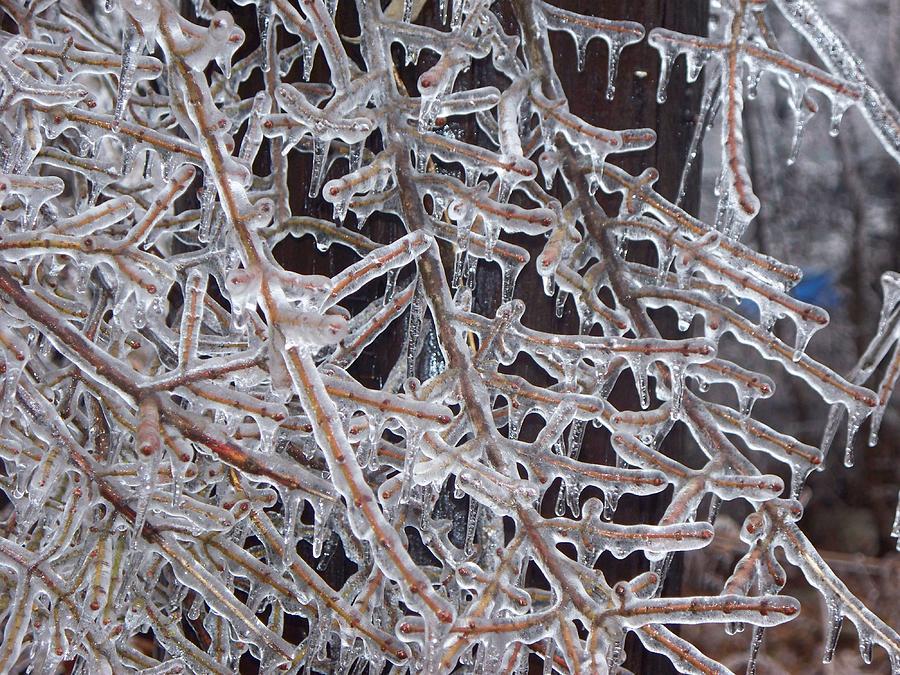 Branches Photograph - Gods Blown Glass IIi by Rosanne Bartlett