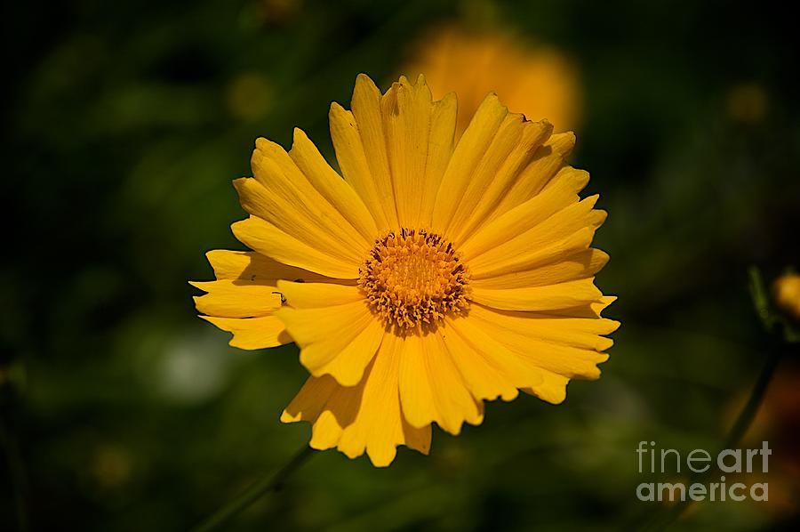Yellow Photograph - Gods Creation-3 by Robert Pearson