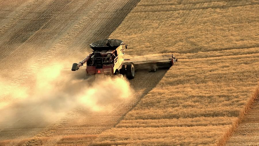 Wheat Photograph - Goin Up 1403 by Jerry Sodorff