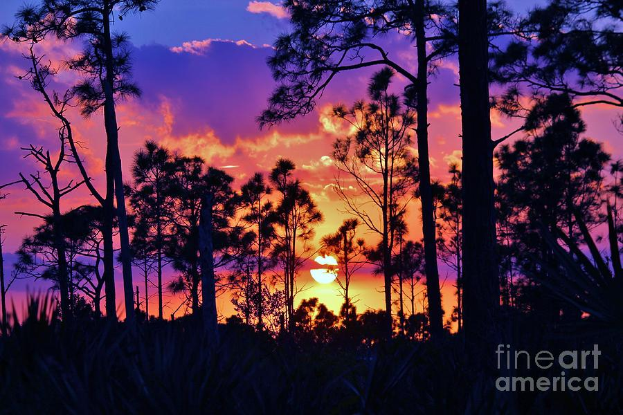 Sunset Photograph - Going Down by Keri West
