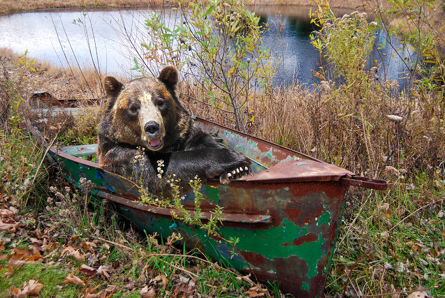 Bear Photograph - Going Fishing by Maria Dryfhout
