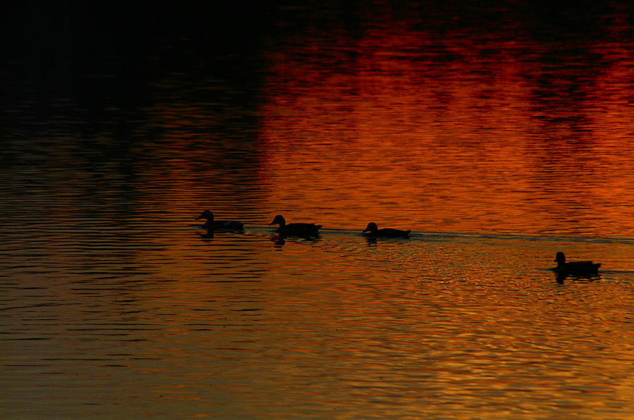 Sunset Photograph - Going Home by T F McDonald