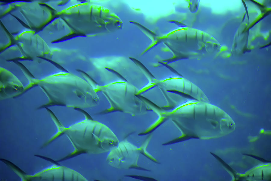 School Of Fish Photograph - Going To School by Aaron Geraud