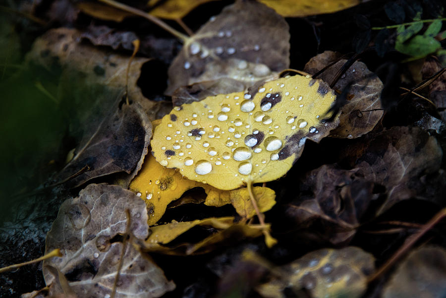gold and diamons by Stephen Holst