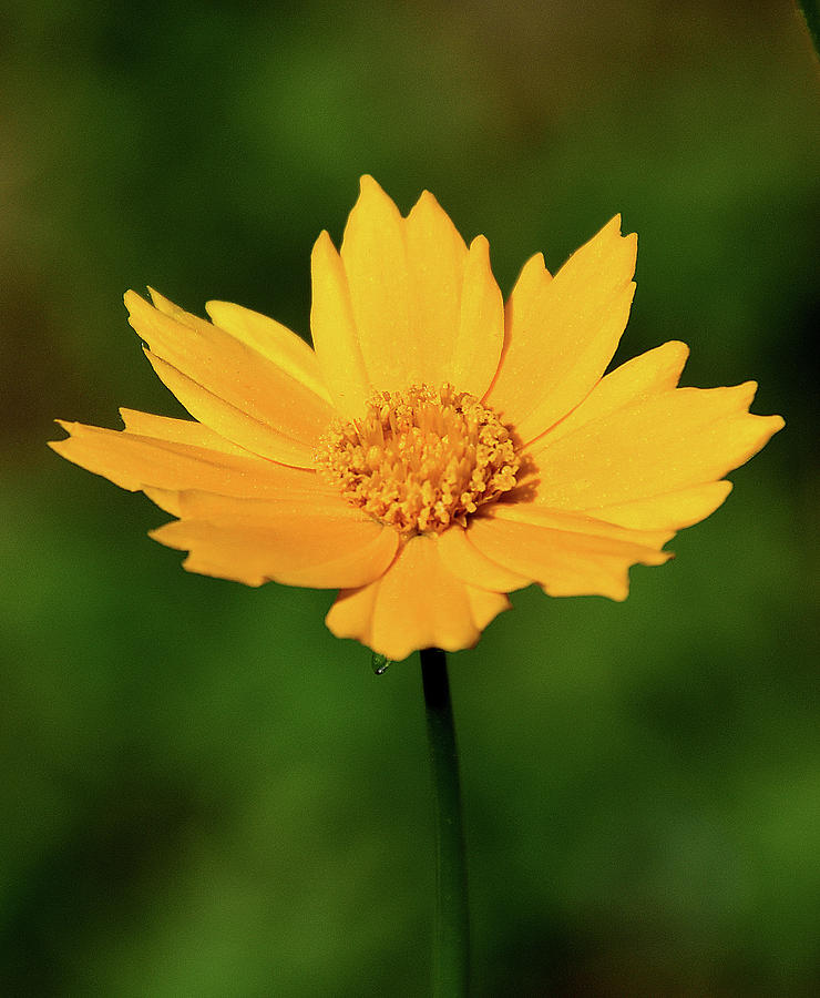 Ann Photograph - Gold In The Garden by Ann Keisling