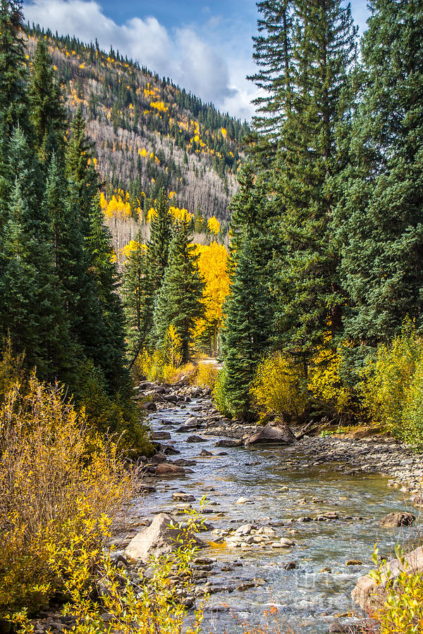 Gold on Henson Creek by Jim McCain