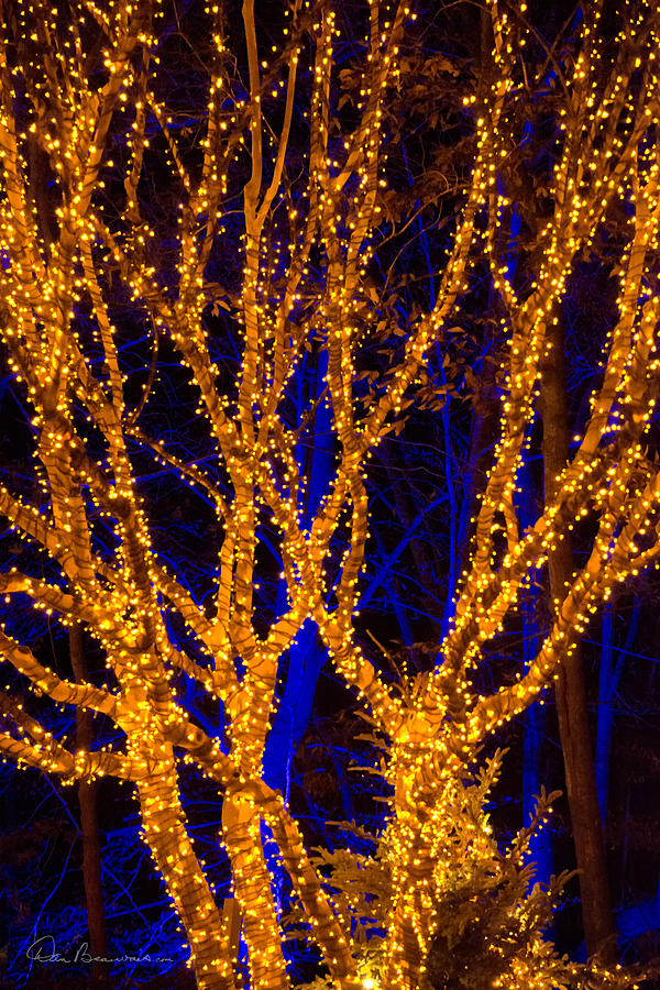 Gold Tree On Blue 5679 Photograph