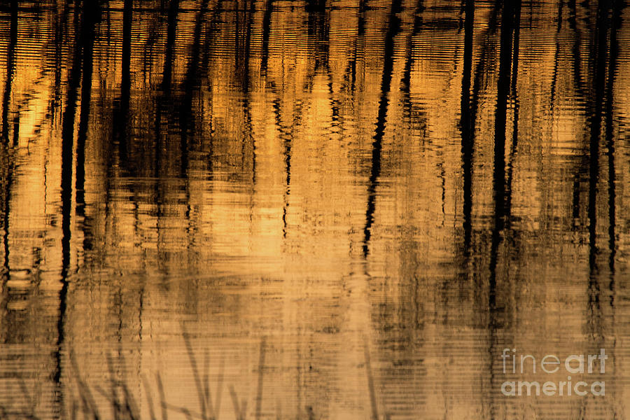 Water Photograph - Golden Abstract by Shevin Childers